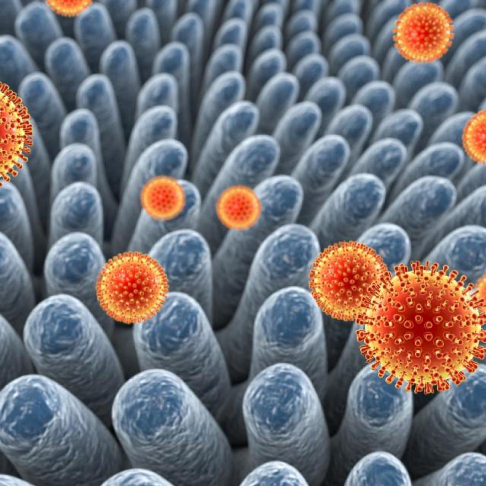 Ротавирусная инфекция причины заболевания